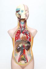 原因●:内臓のトラブル