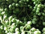 梅雨の食欲不振を解消する実山椒