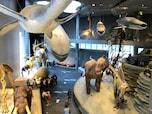 スケールの大きさに感動! 上海自然博物館(中国)