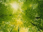 2017年の色「グリーナリー」を活用するカラーとイメージ