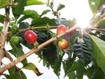 コナコーヒーの産地「コナ・コースト」