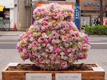 遅咲きの桜が鑑賞できるイタリアンレストラン「カフェ ラ・ボエム 桜新町」