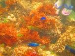 感動! 熱帯魚のいる海、式根島