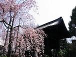 上野公園周辺にあるお花見穴場「両大師堂」、「大黒天護国院」など