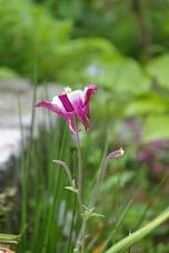 鎌倉、初夏の花めぐり