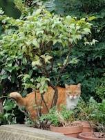 庭先の猫よけ対策に