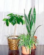 冬の間の観葉植物の管理の仕方