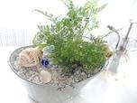 安・簡・短!予算800円以内で楽しむ、涼しげ観葉植物