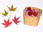庭植物でインテリアにも季節の彩りを