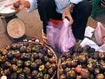 東南アジアのトロピカルフルーツ