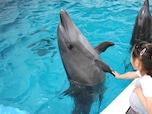 みんな大好き、水族館をもっと楽しむには?