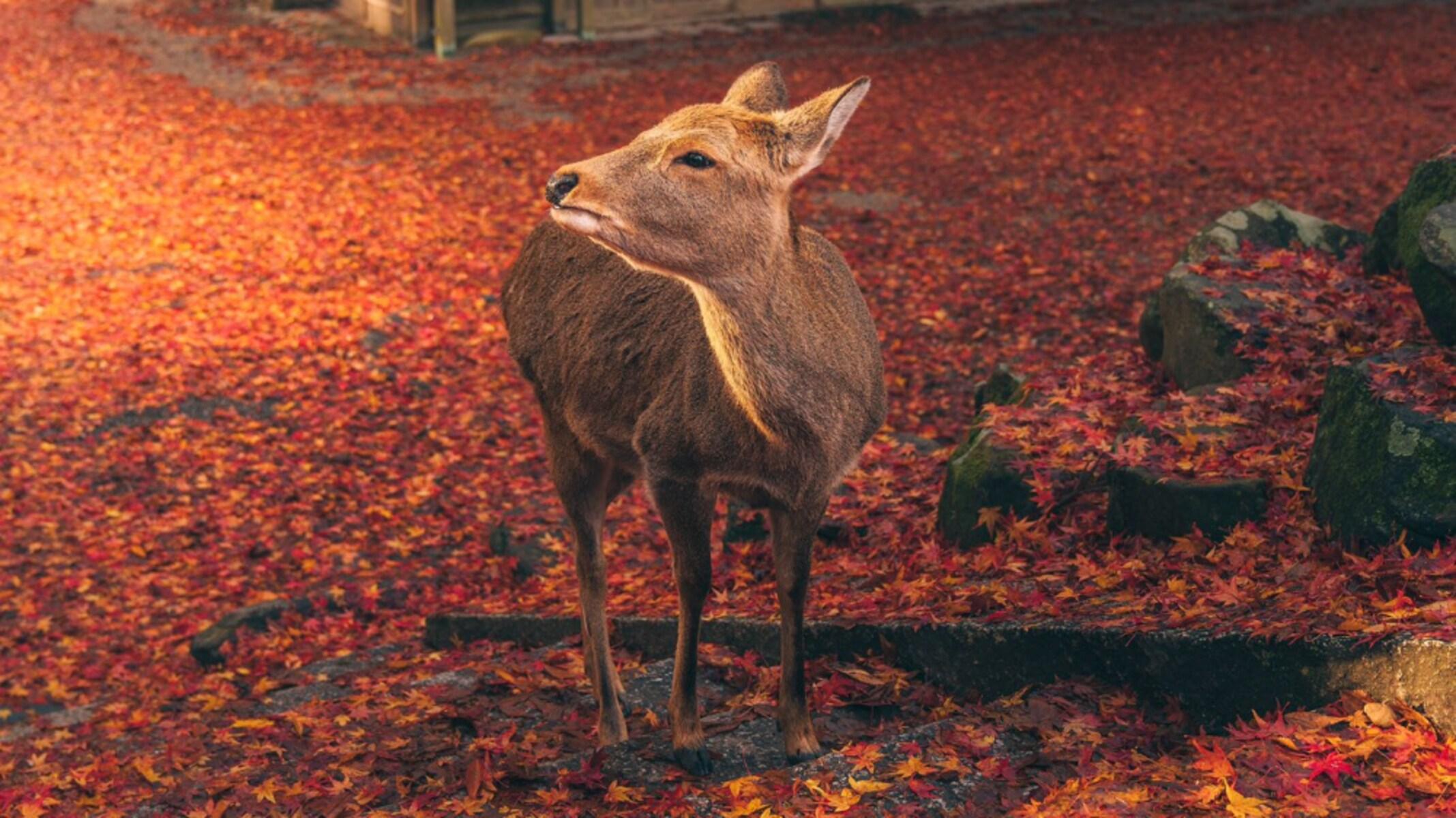 「まるで花札の世界」思わず見とれてしまう…美しすぎる奈良の風景に称賛の嵐