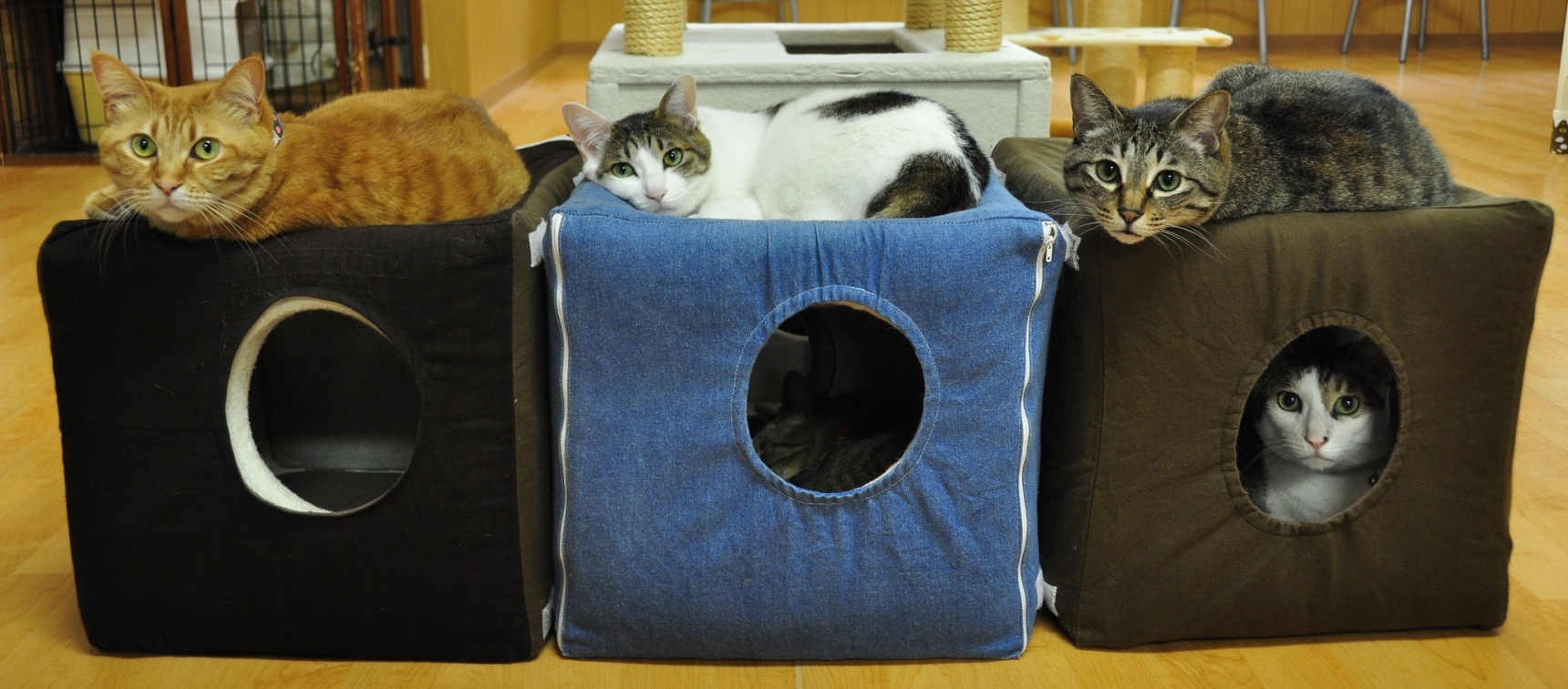 4 Purrfect Kansai Cat Cafés