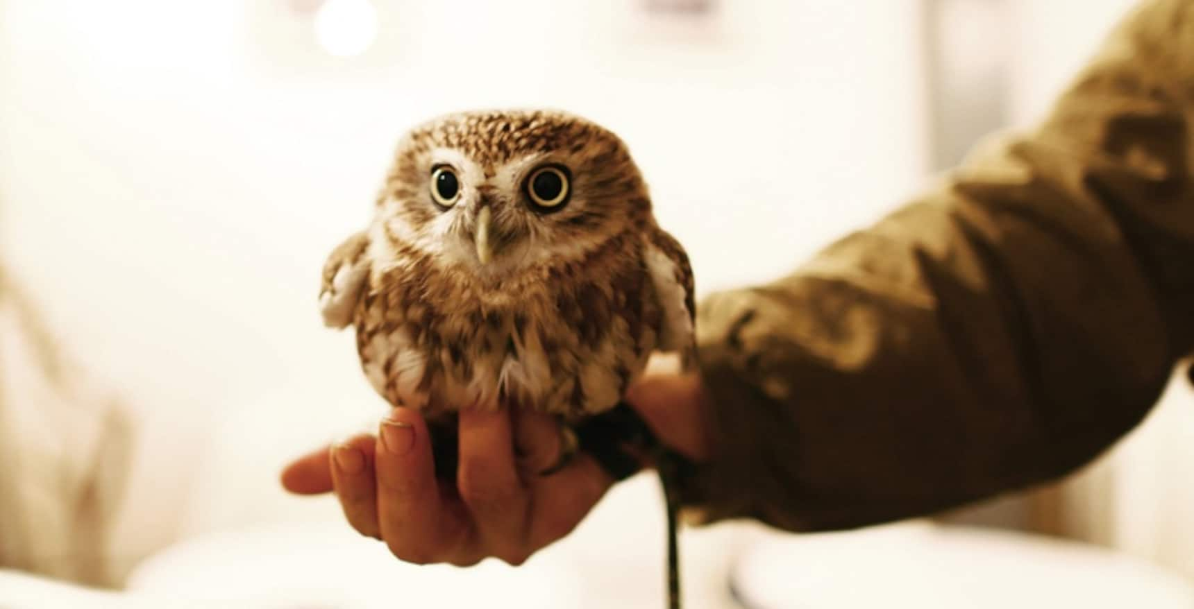 A National Who's Whooo of Owl Cafés