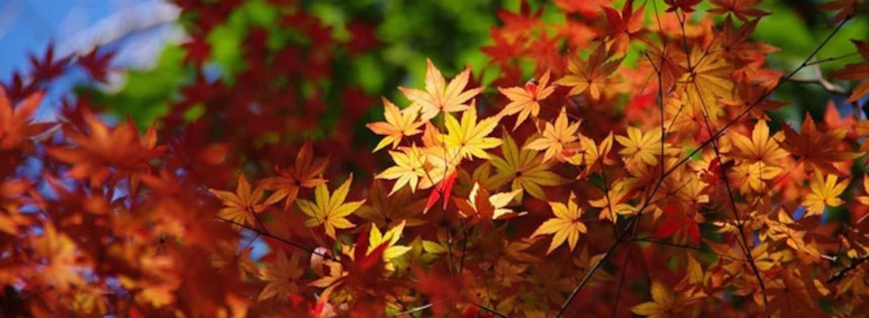 5 Pro Tips for Great Autumn Shots