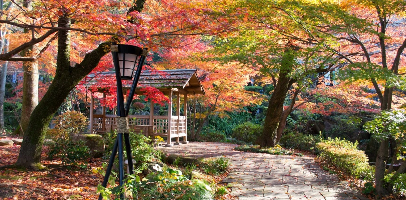 Gifu's Top 5 Autumn Color Spots