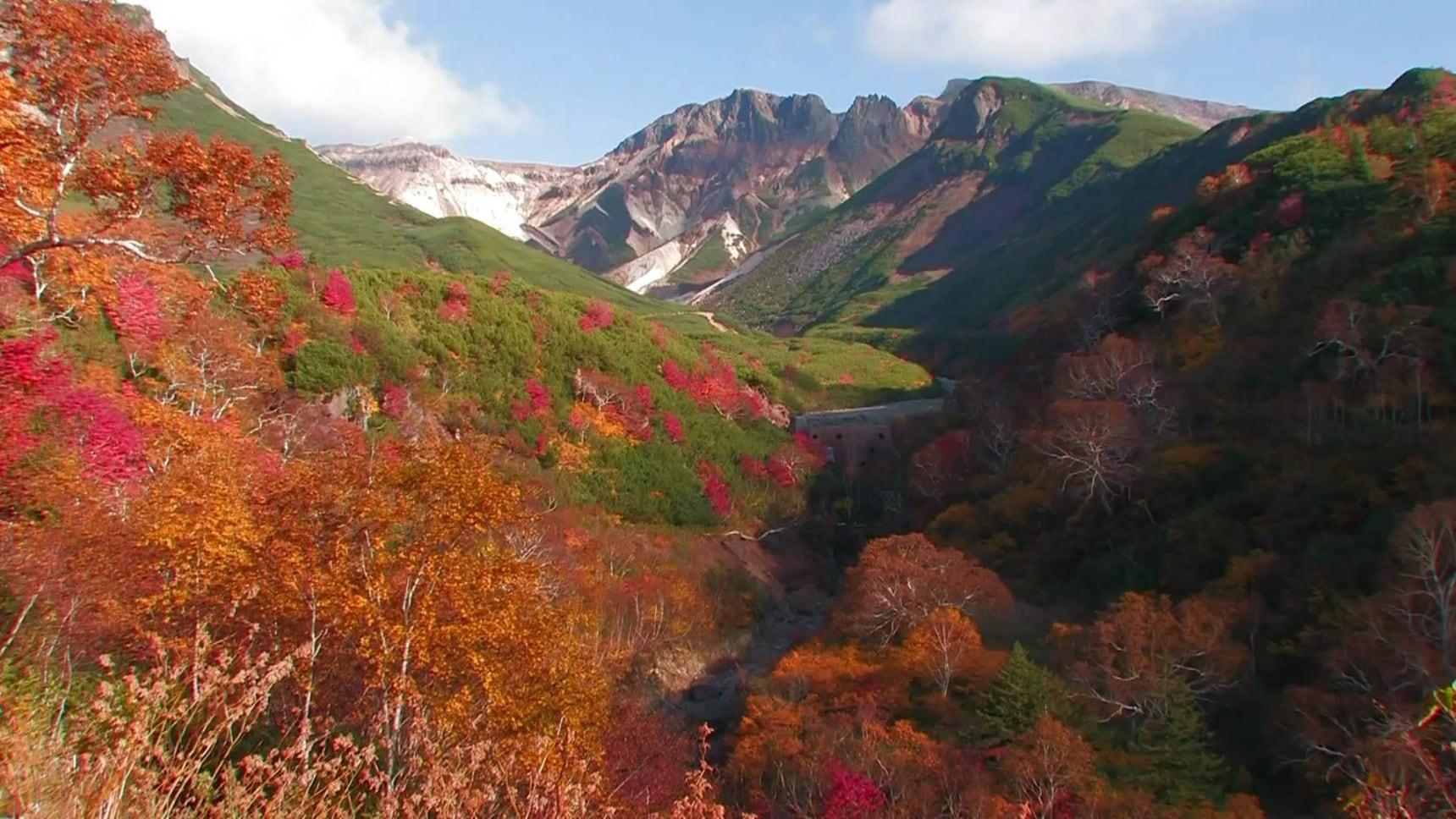 Hokkaido's Top 5 Autumn Color Spots