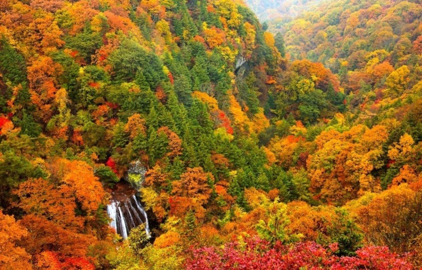 The Top 5 Fall Color Spots in Koshinetsu