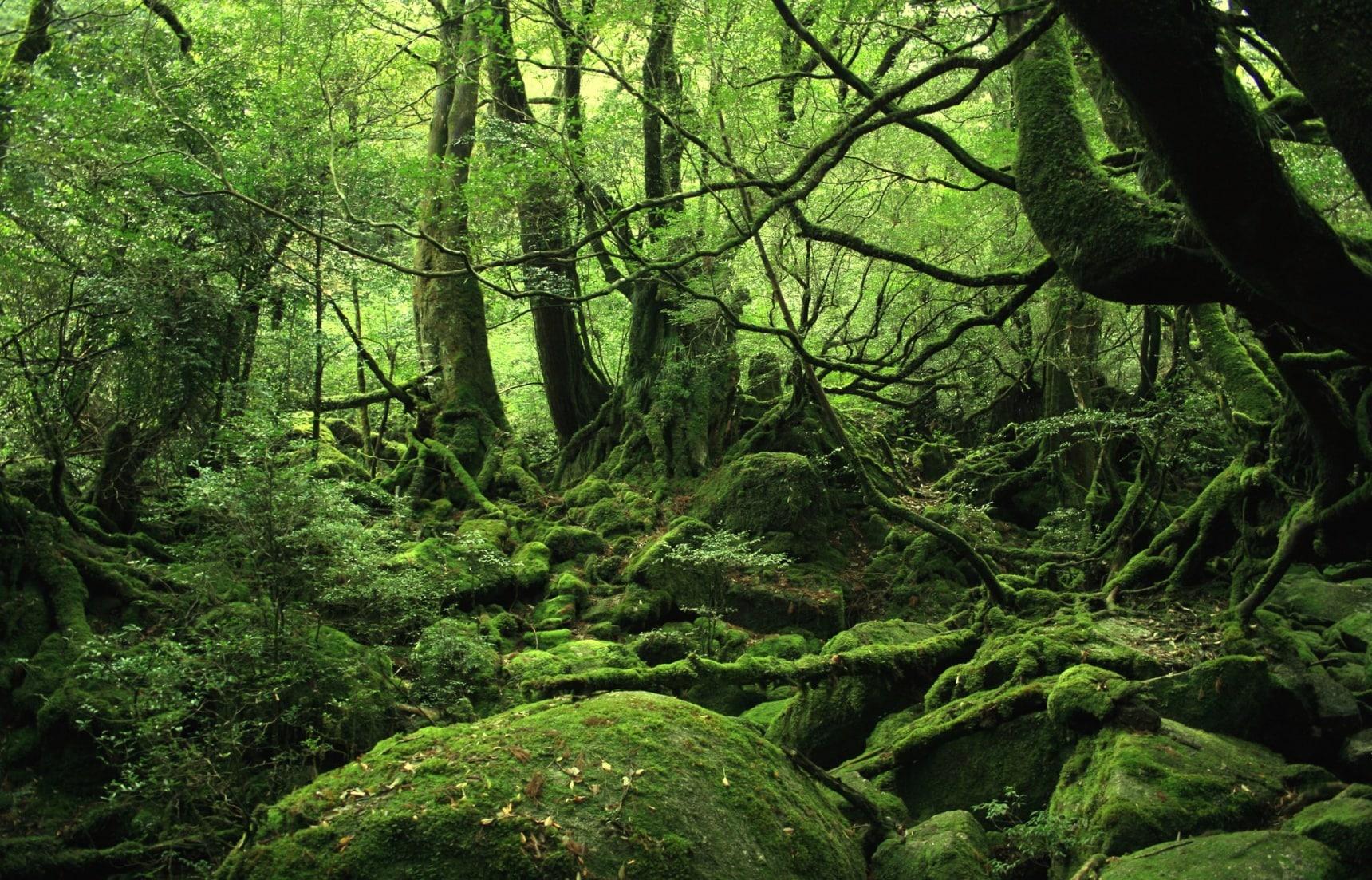 3 Magical Ghibli Hikes