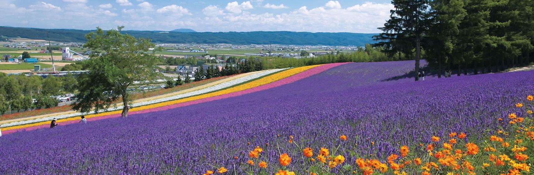 Japan's Top 3 Flower Parks