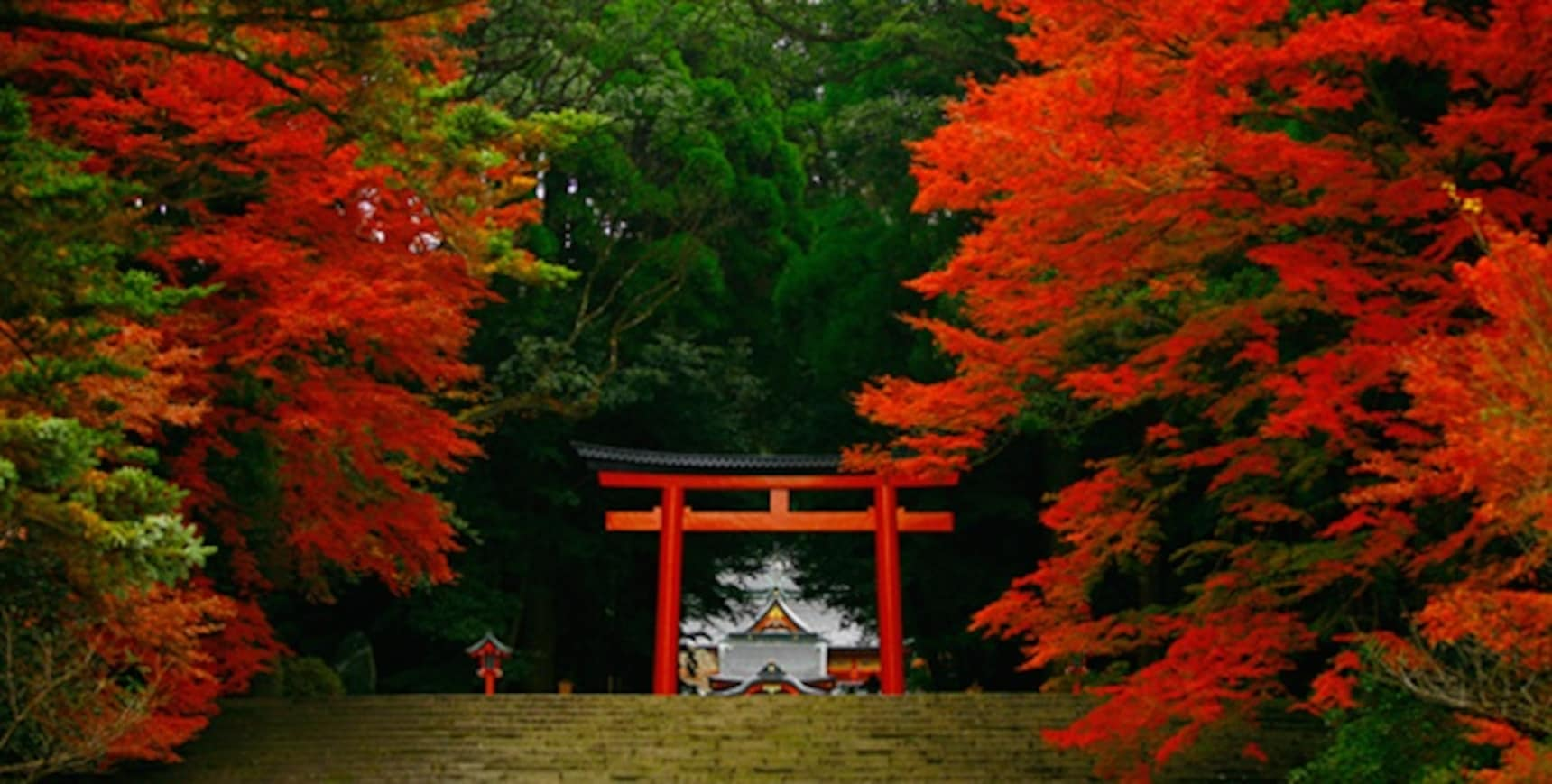 5 Kyushu Shrines You Can't Miss