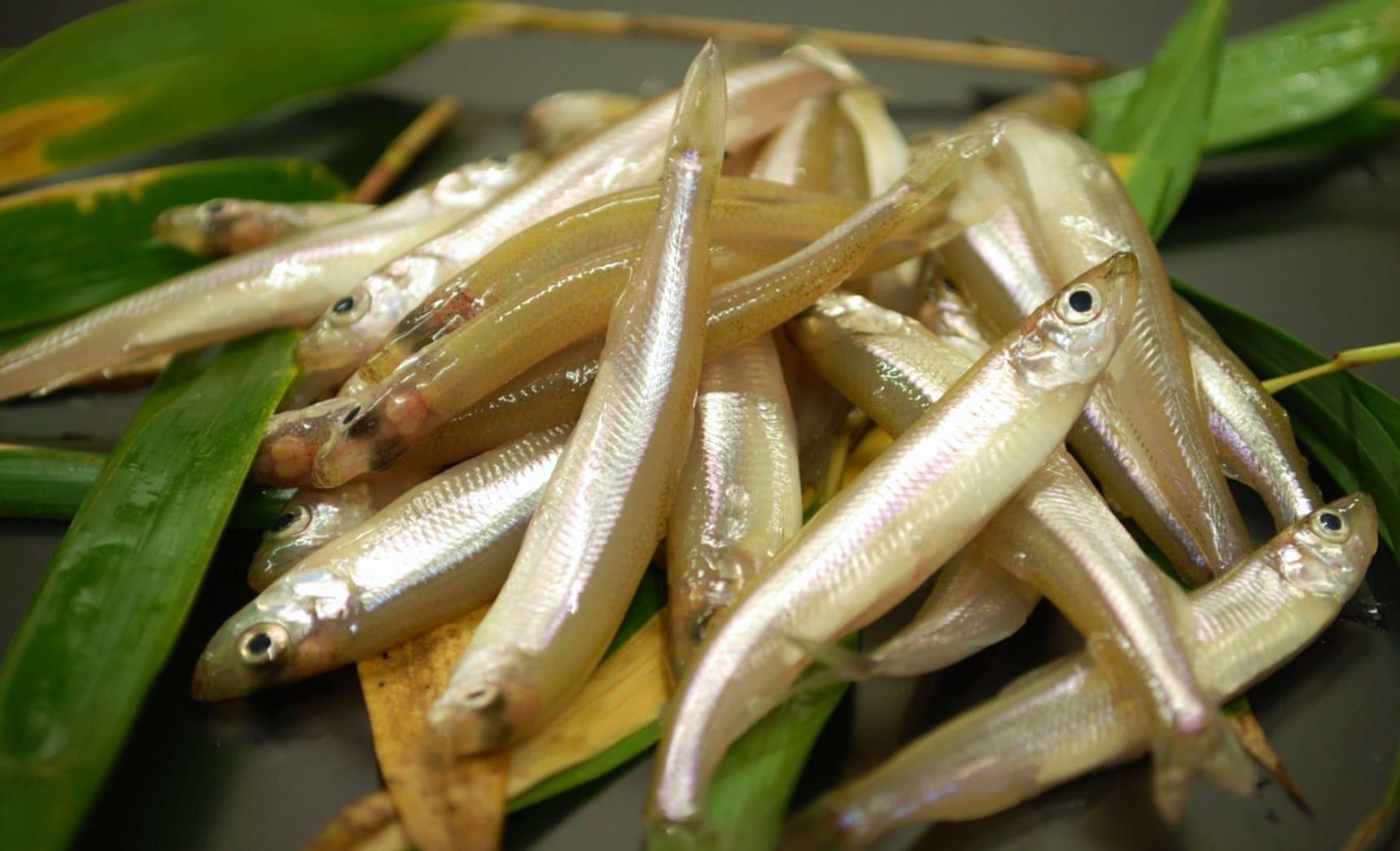 """在日本的冬天體驗冰上垂釣——""""西太公魚""""快上鉤~"""
