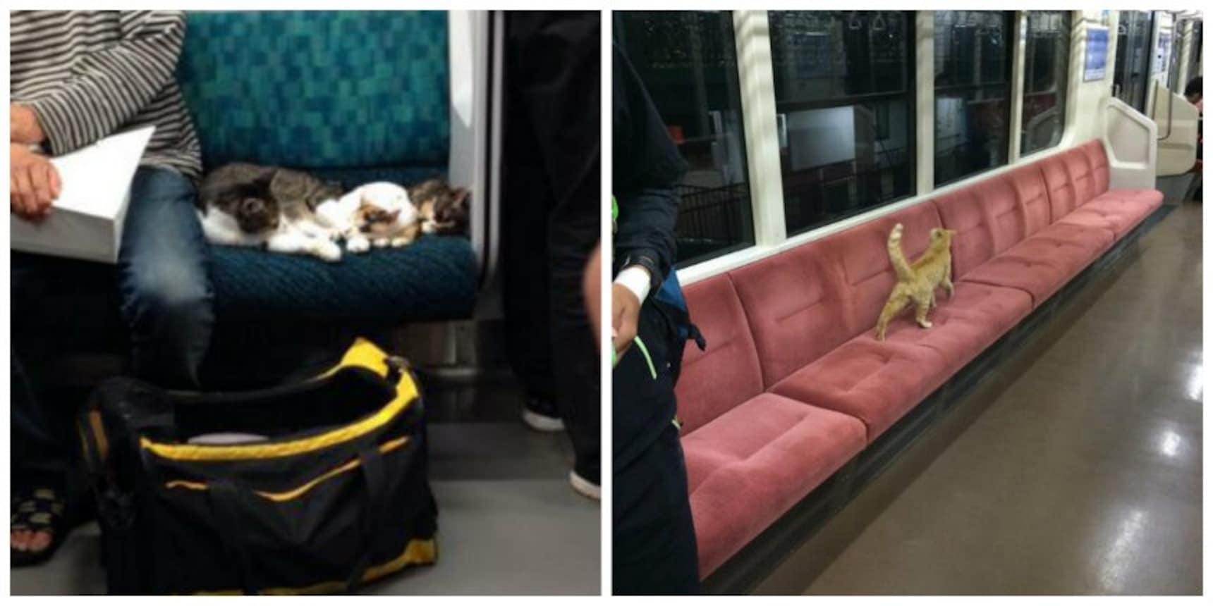 Curious Cats Sneak onto Trains