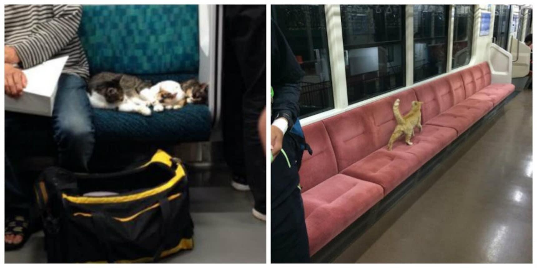 เหล่าแมวขี้สงสัย กับการผจญภัยบนรถไฟ