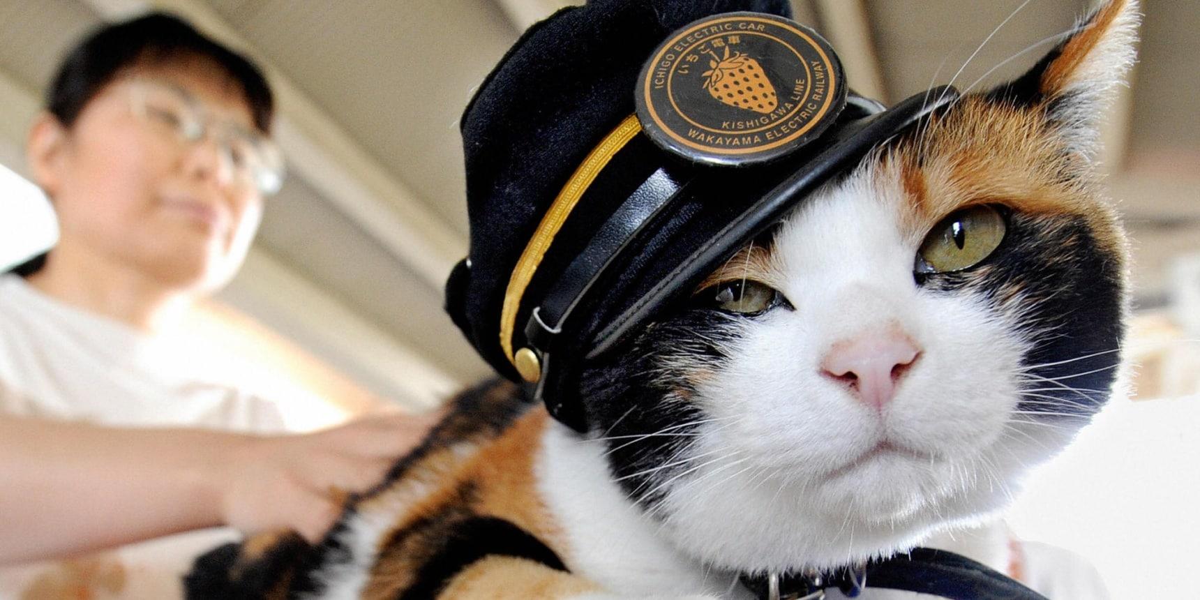 贵志川线大改造之二:猫咪小玉站长和猫咪电车