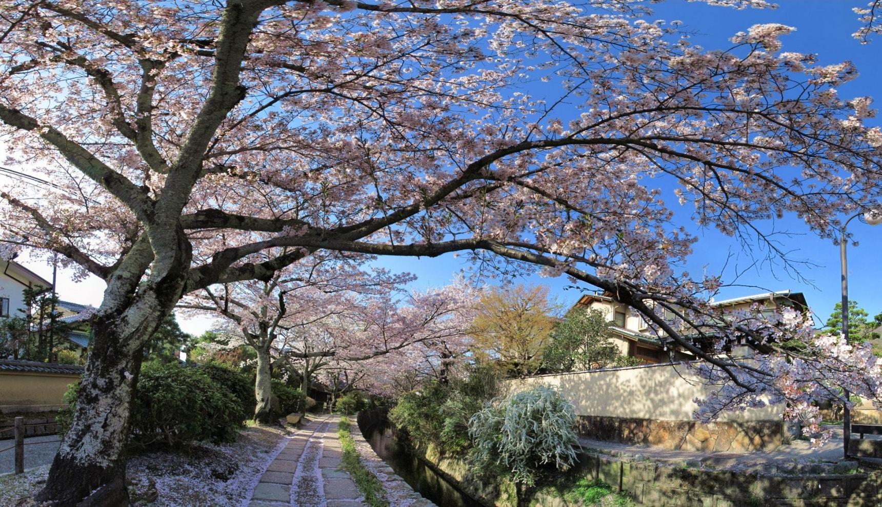 走出东京 —— 日本各地赏樱热点集萃