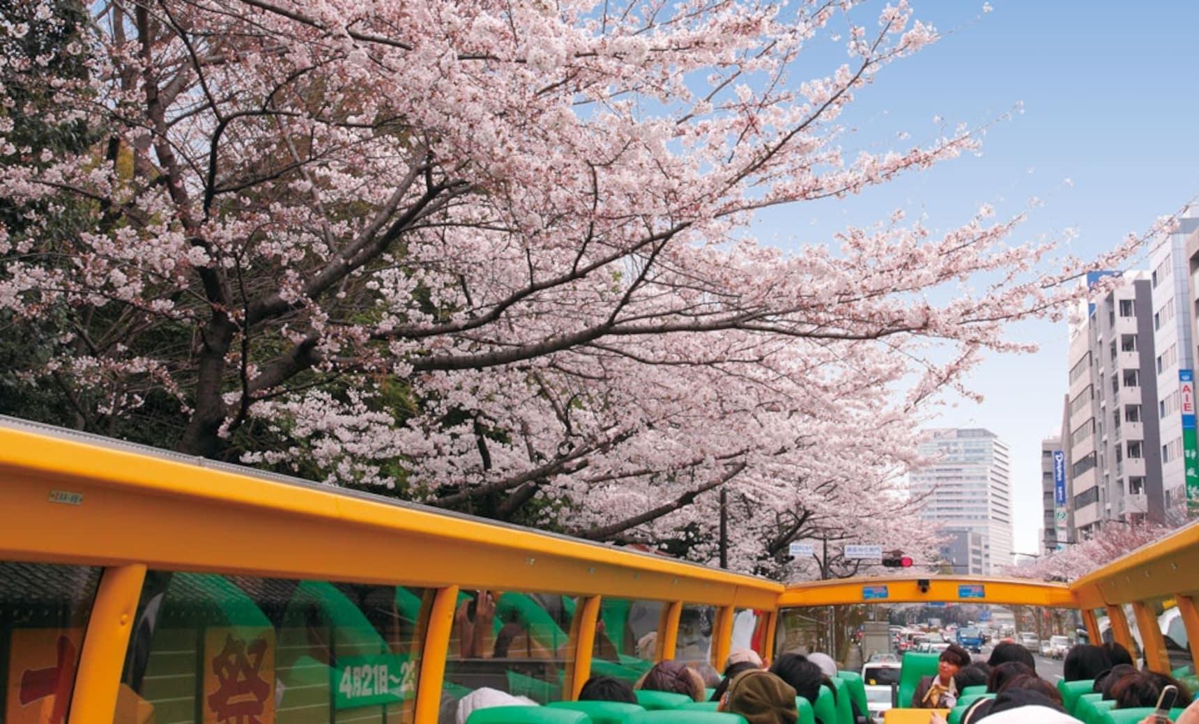 5 ยานพาหนะชมซากุระ สำหรับคนที่ไม่ชอบเดิน
