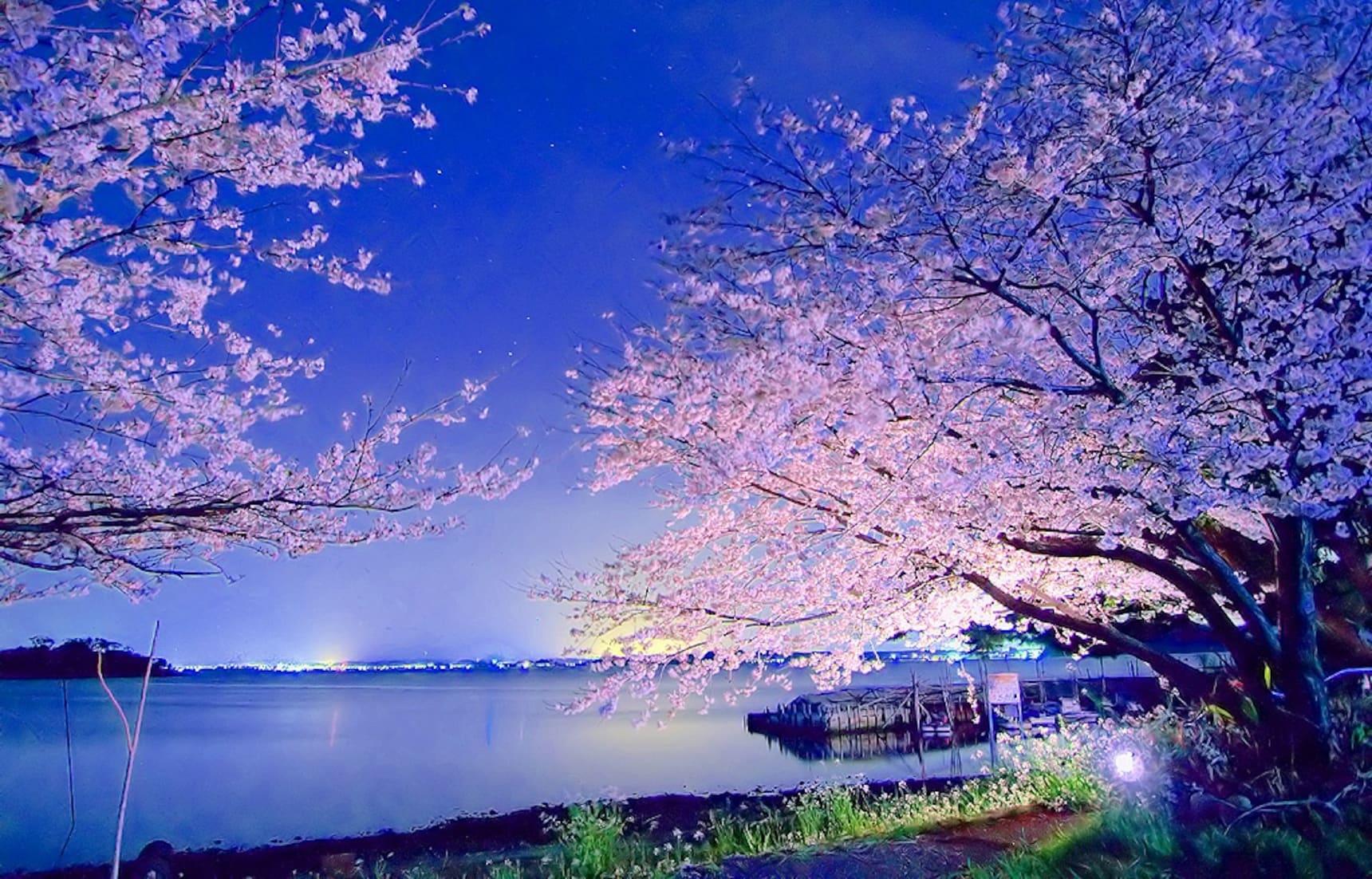 8 จุดชมซากุระยามค่ำคืนในโตเกียว