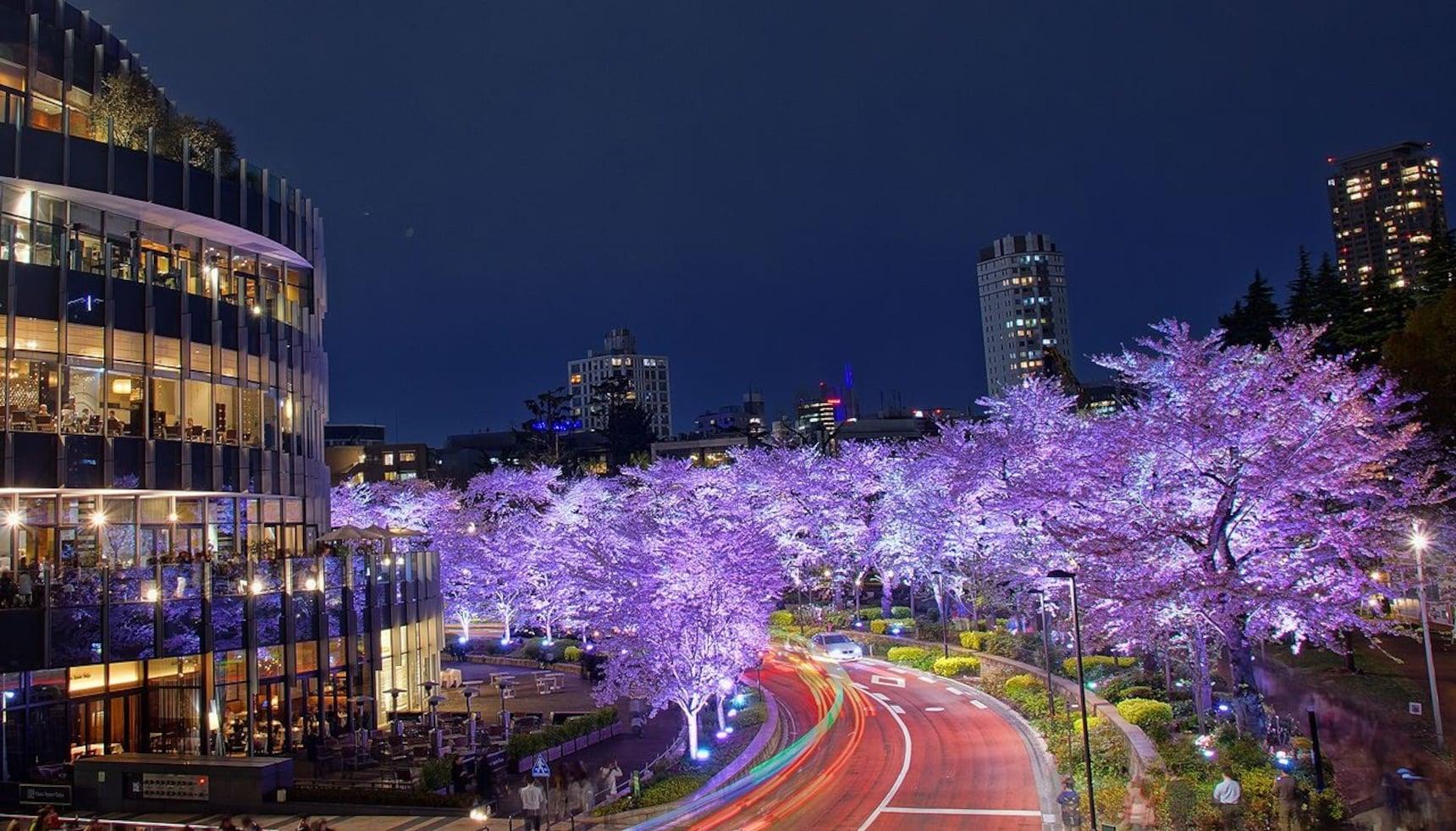 在东京midtown享受浪漫的樱花绝景大餐