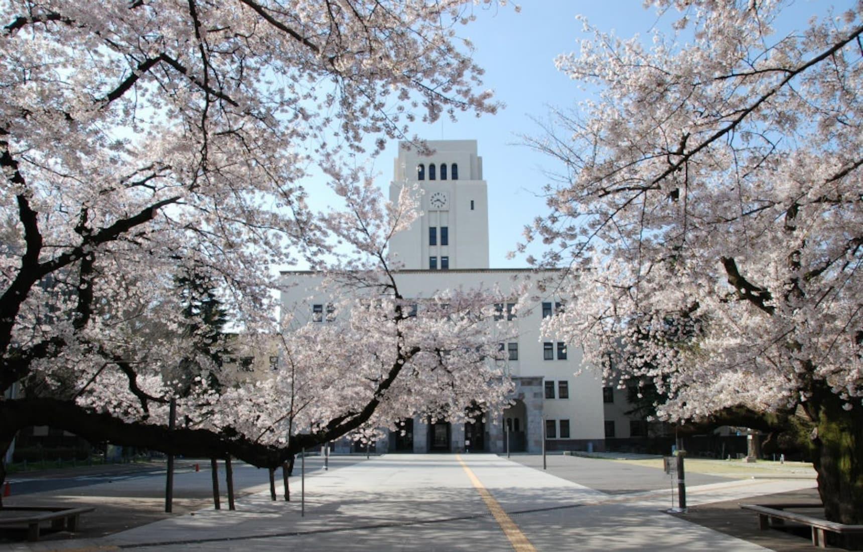 街角传来的熟悉旋律 — 5首经典的毕业季樱花之歌