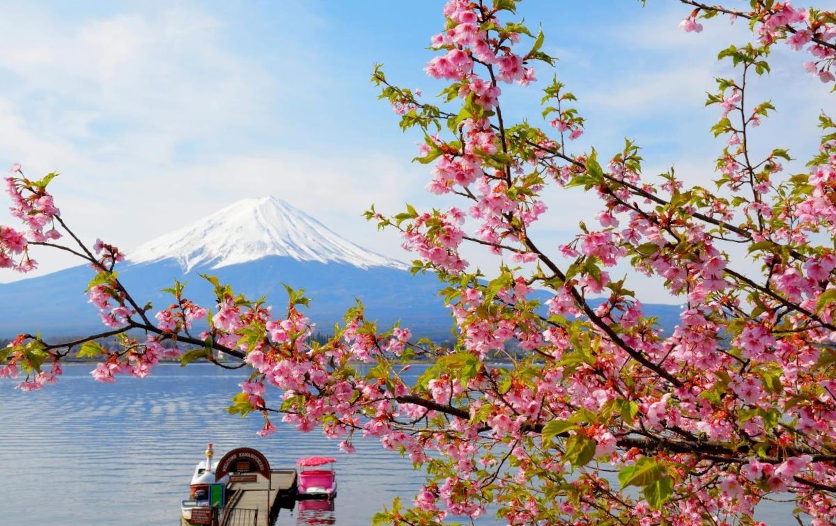 东日本地区赏樱必去景点推介(山梨篇)