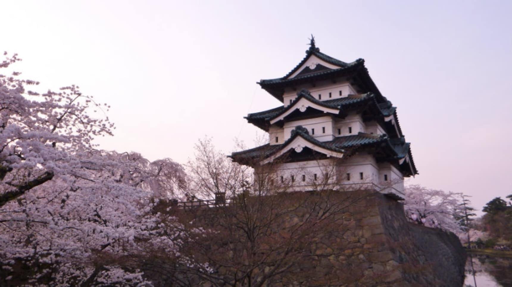 Sakura in Hirosaki City