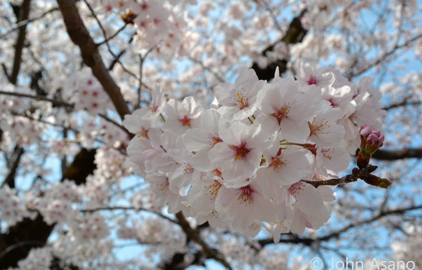Top 5 Hanami Spots in the Tokai Area