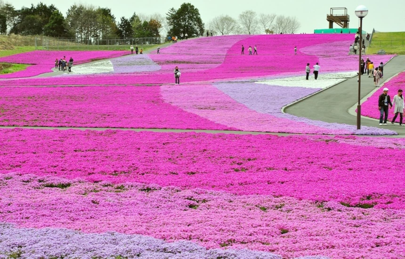 5 Lesser-Known Sakura Spots Around Tokyo