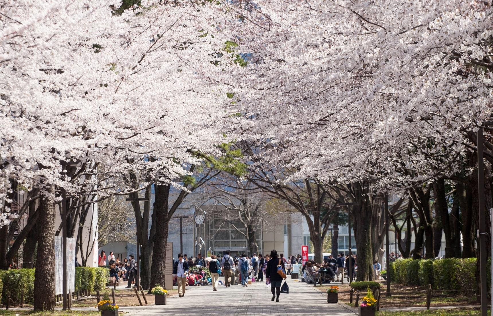 5 อันดับเมืองยอดนิยมในการไปศึกษาต่อที่ญี่ปุ่น