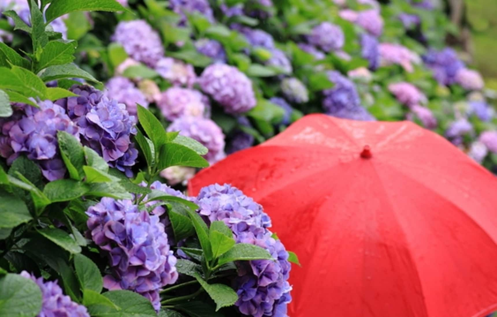 7 More Things to Do on Rainy Days in Tokyo