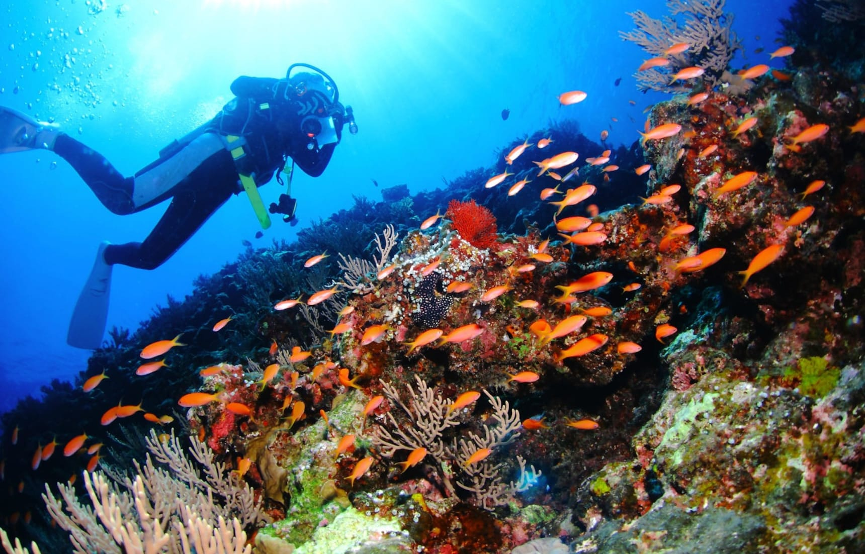 6 จุดดำน้ำในทะเลสวยใส แถบ Kanto