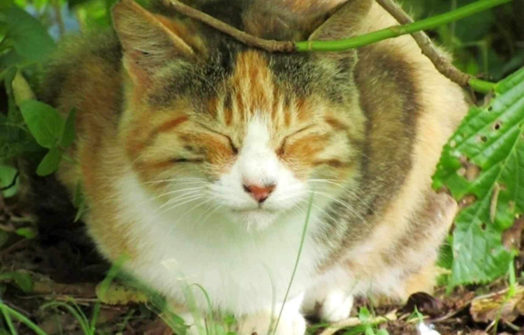 Explore This Cat Island Close to Tokyo