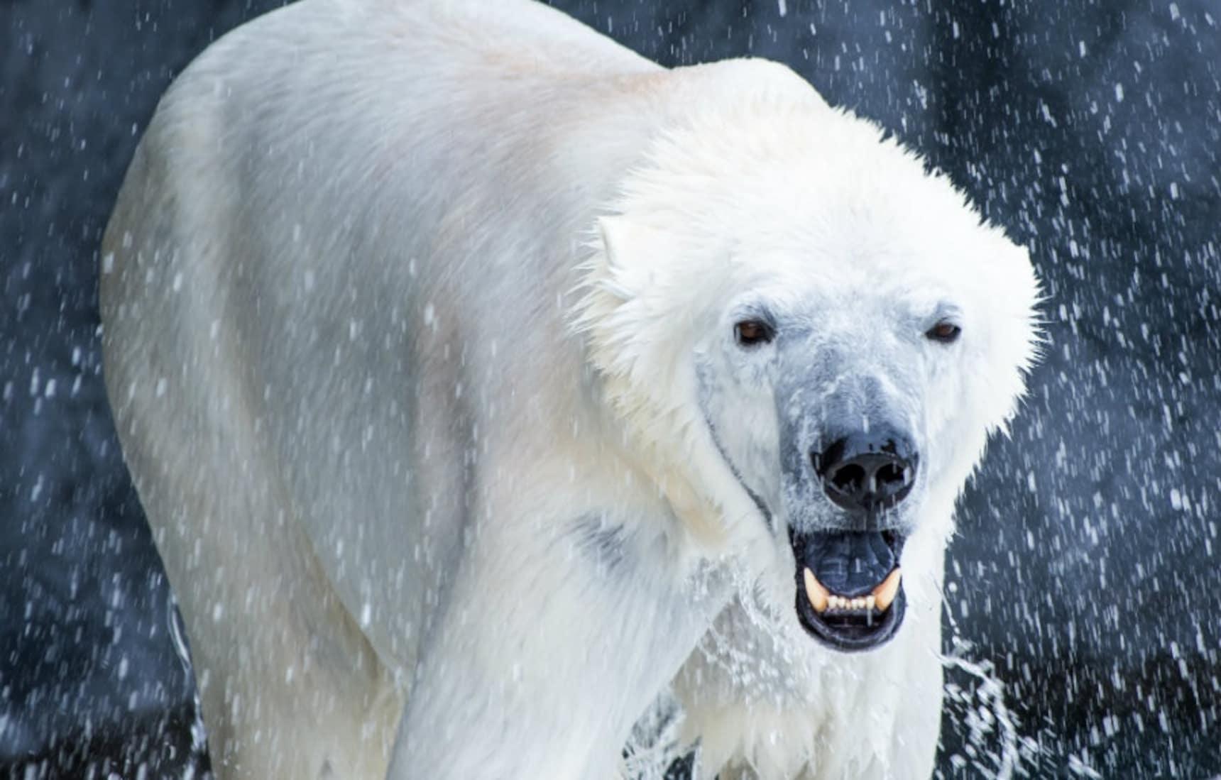 與動物夥伴共同分享歡樂的旭山動物園