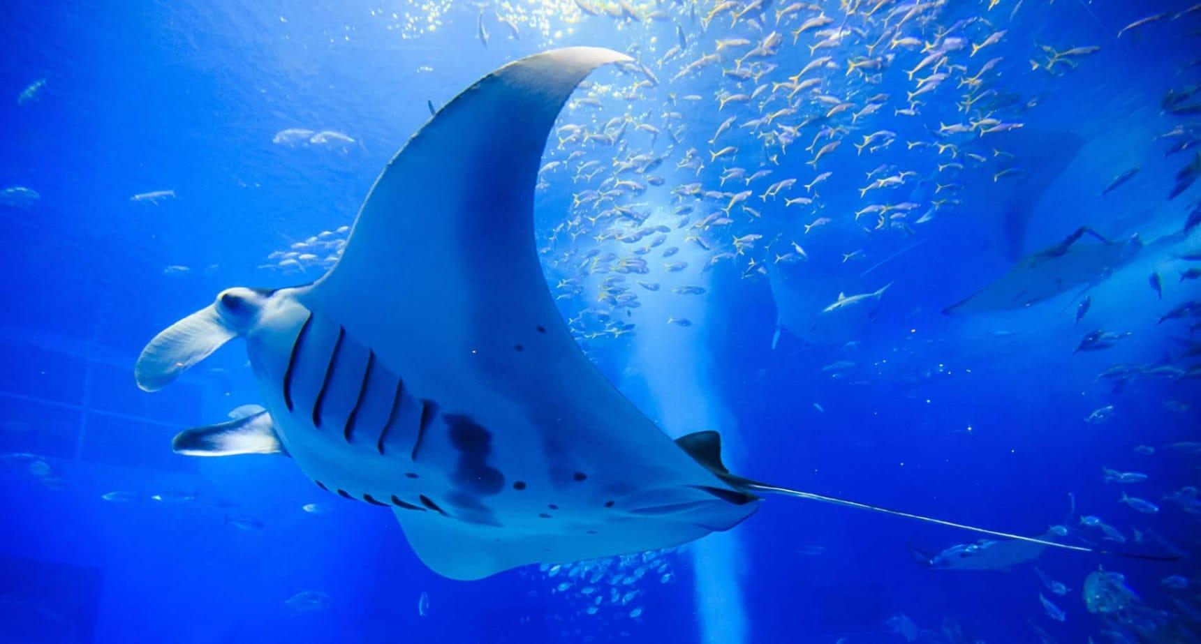 智游人|日本排名前10位的大型水族馆
