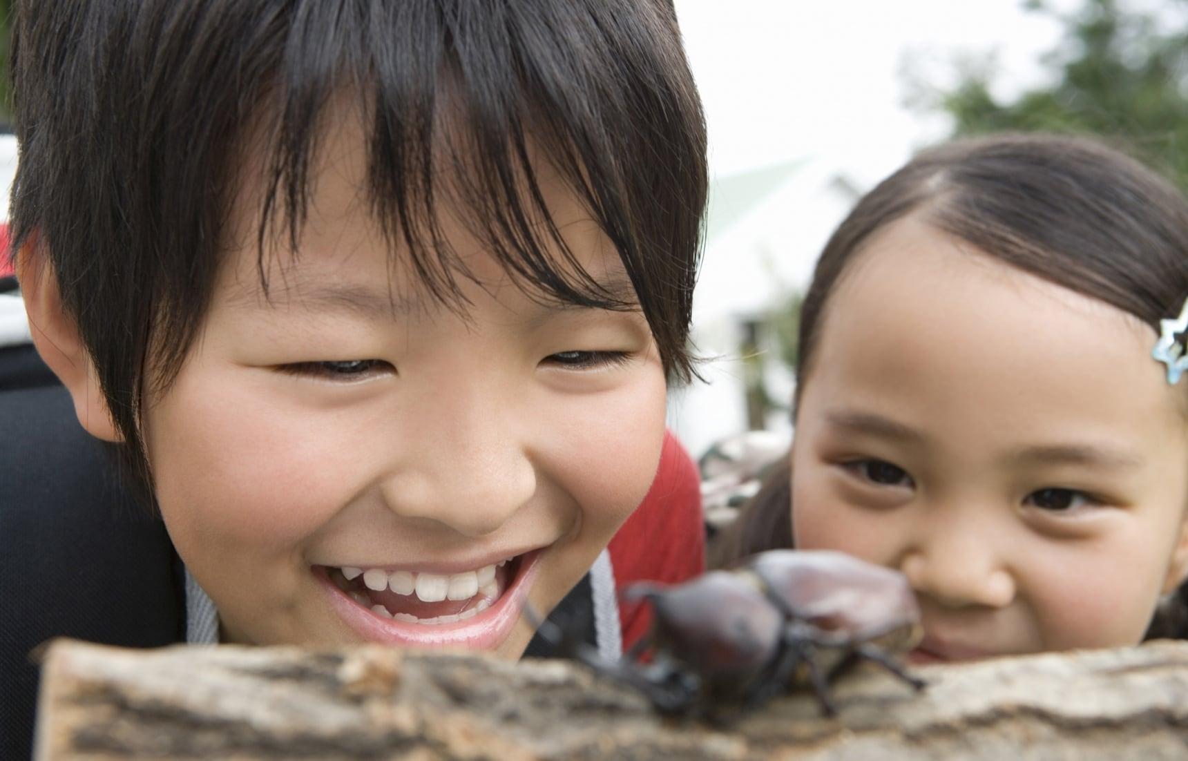 在日本最受欢迎的7种昆虫
