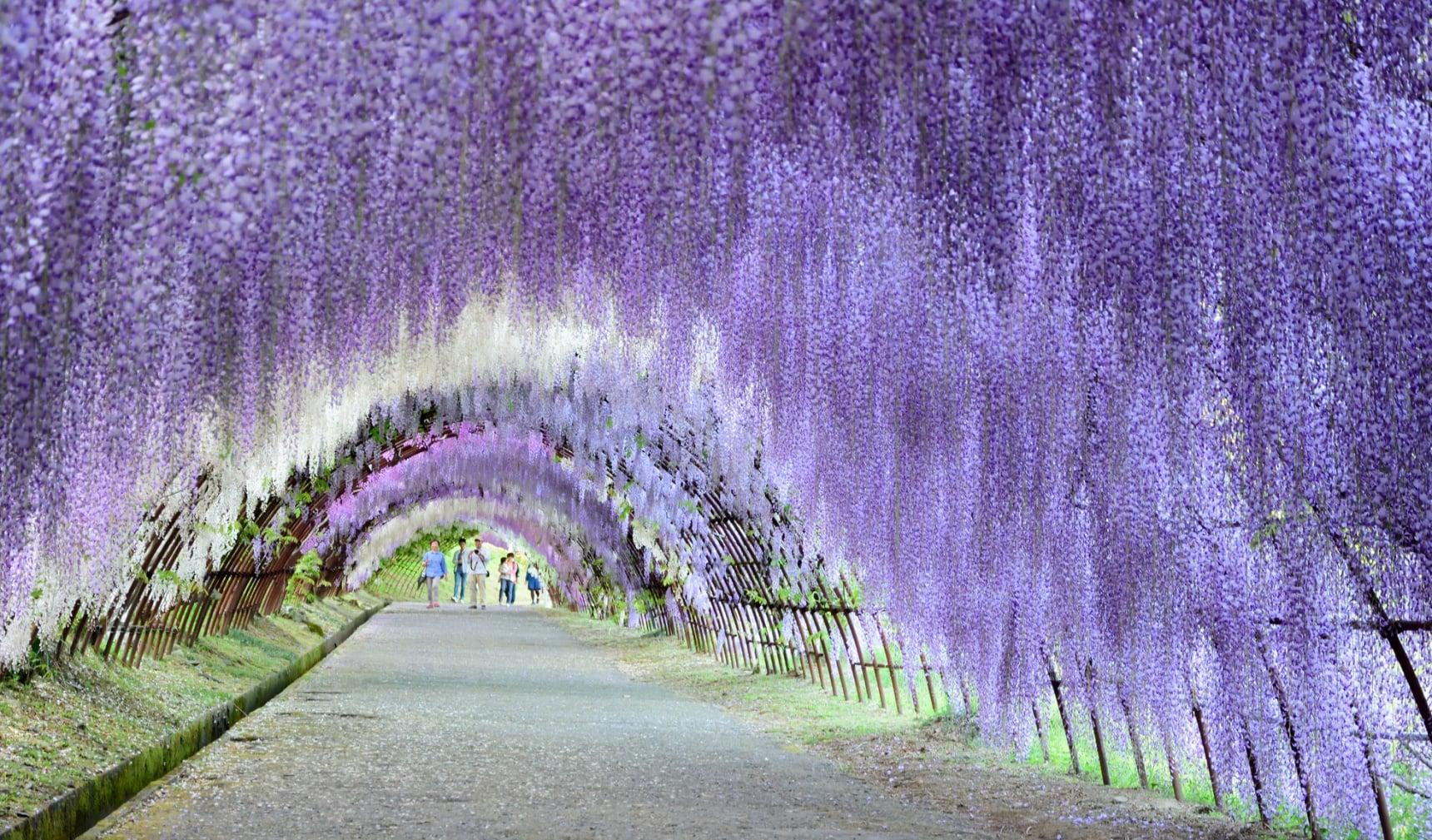 จุดชมดอกไม้ยอดนิยม 10 แห่งในคิวชู