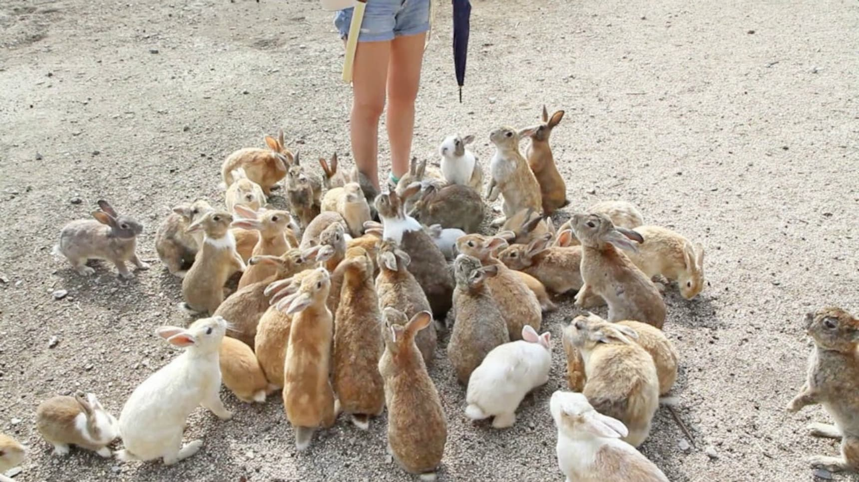 5 Great Things for Animal Fans to Do in Japan