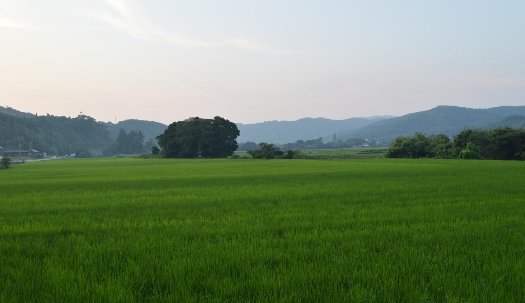 九州大分县的农业体验之旅