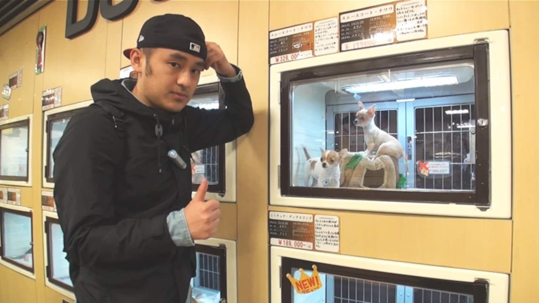 日本宠物店中的奇葩宠物可爱至极!