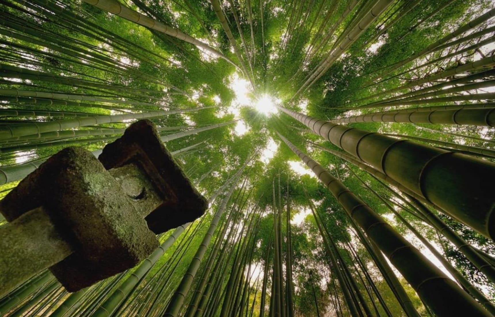 Hokokuji: The Bamboo Temple of Kamakura